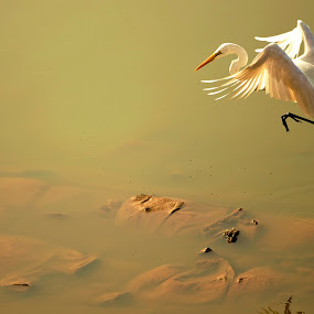 Get set go..  by Soumya Geetha - Animals Birds