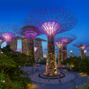 Gardens By The Bay by Jane Helle - City,  Street & Park  Historic Districts ( structure, gardens structure, park, blue hour, architecture, singapore, city, blue sky, tree, blue, city structure, gardens by the bay, long exposure )