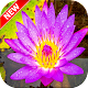 Download Water Lily Wallpaper For PC Windows and Mac