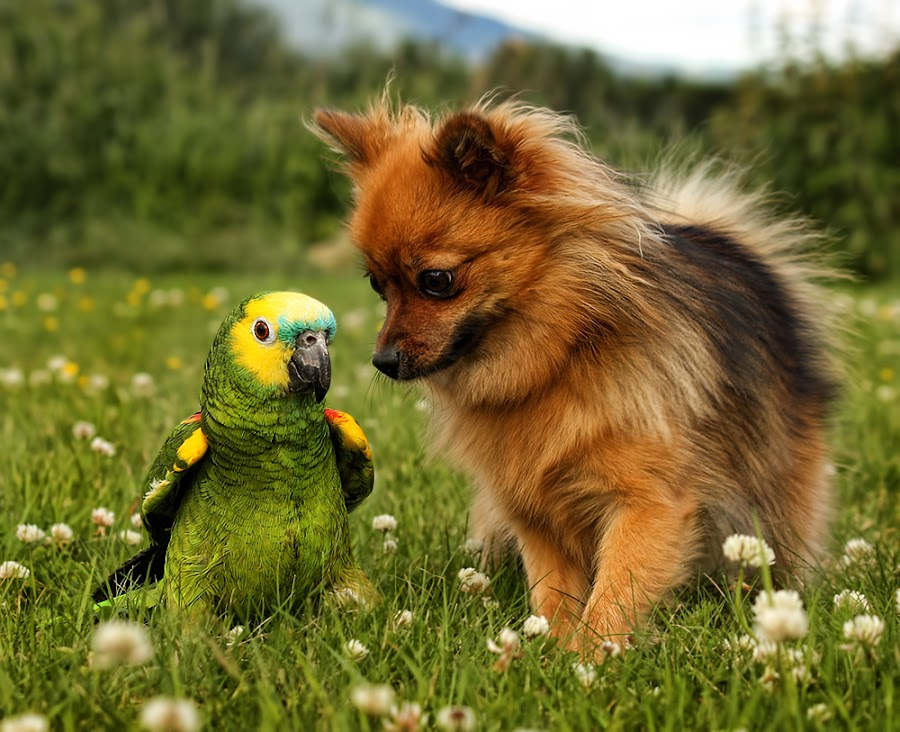 Pelle and Bambi by Jane Bjerkli - Animals - Dogs Portraits ( friends, parrot, summer, dog,  )