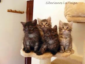 Photo: Para comérselos XD Quíron, Quían, Quennel y la princesita Qitarah Lady Grey ;P