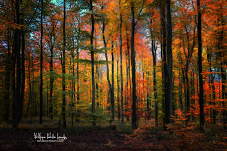 Photo: I enjoyed a beautiful light to run in the forest to take some photos. About 250, I'll keep 7 or 8 ... Here is the first! Crayons de couleur  More on my website: www.naturephotographie.com  #fallcolors  #autumnphotography  #forestphoto