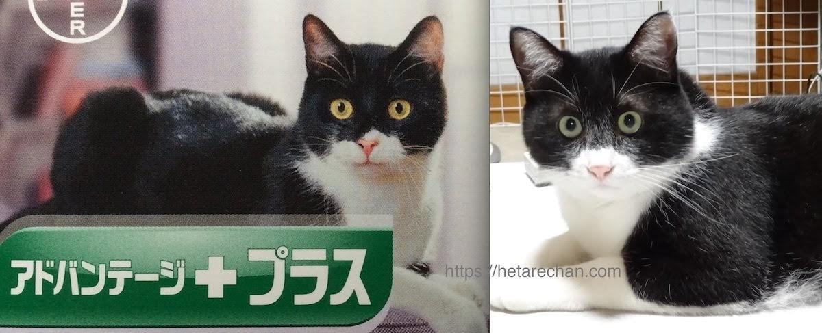 猫用ノミ駆除薬 アドバンテージプラス