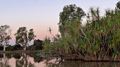 Photo: Day 3 -  River Pandanus (Anjimjim) on Yellow Water Cruise © Ian Morris