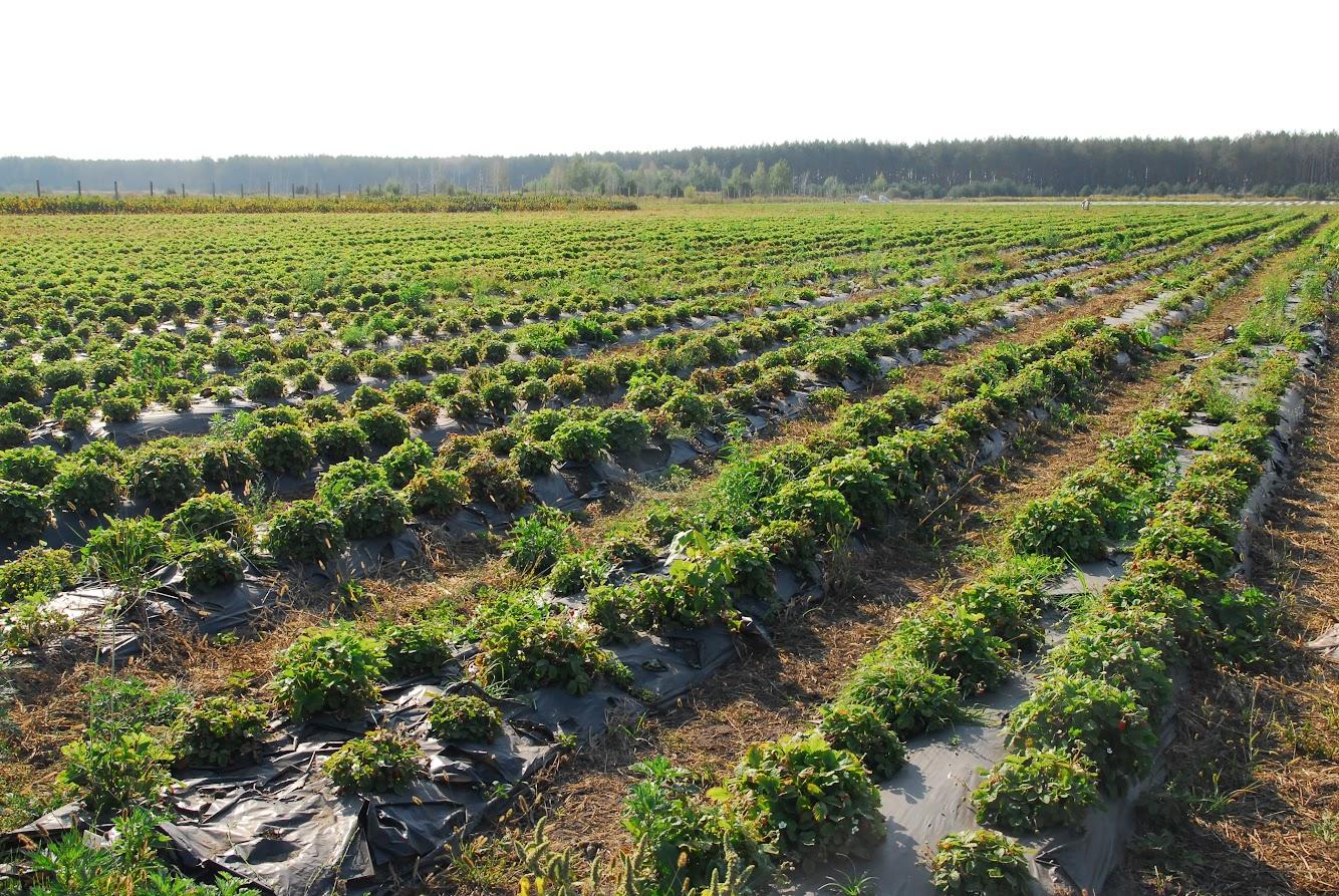 органик тур влт флора евгений базилюк