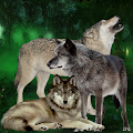 Wolves Attack in Jungle APK