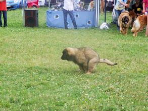 Photo: Alors Oural, une petite envie au milieu du ring