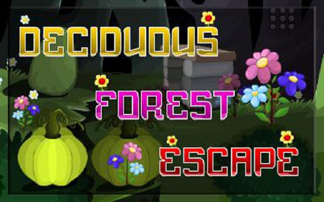Deciduous Forest Escape