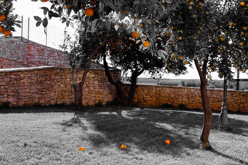 Orange in the grey di GiannaParisi