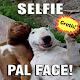Imagenes para Whatsapp Download for PC Windows 10/8/7