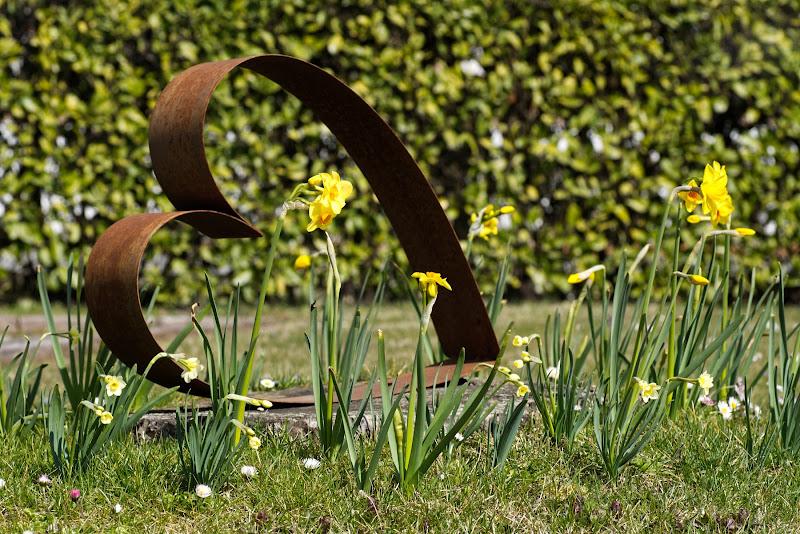 Primi fiori nuova speranza di vita di galubio52