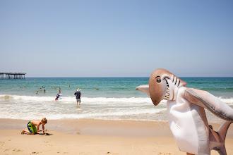 Photo: Dusky at Hermosa Beach. Credit: Chris Panagakis