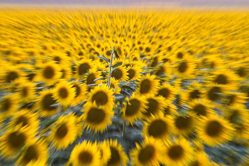 un mare giallo di paola_cattini