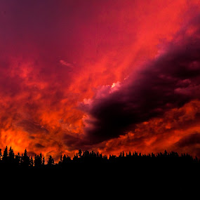 Fire in the Sky by Scott Morgan - Landscapes Sunsets & Sunrises ( clouds, orange, red, tree line, sunset, cloudscape, tree tops, sky fire, fire, fire in the sky,  )
