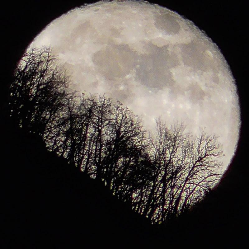 Luna  di Orsobubusettee