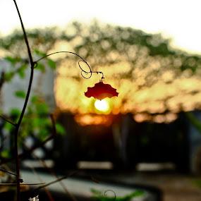 eco friendly, zero watts bulb. by Nishanth Harikrishnan - Nature Up Close Other Natural Objects