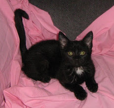 Photo: This photo of Fred was taken by Cynthia Eardly, the cat rescue person who gave me Fred. Thanks Cynthia.