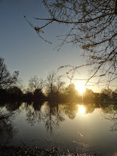 Photo: Dreamy sunset among reflections of trees at Eastwood Park in Dayton, Ohio.