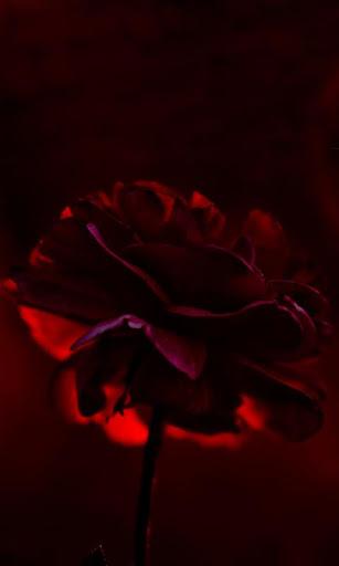 Lwp の赤いバラ