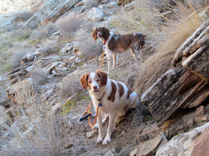 Photo: Boulder and Torrey