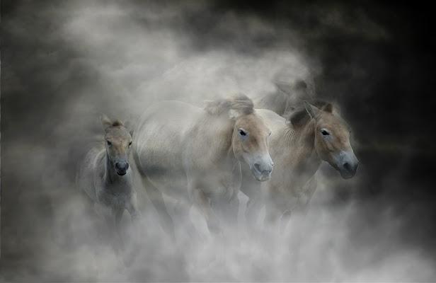 Cavalli DA battaglia di GB1