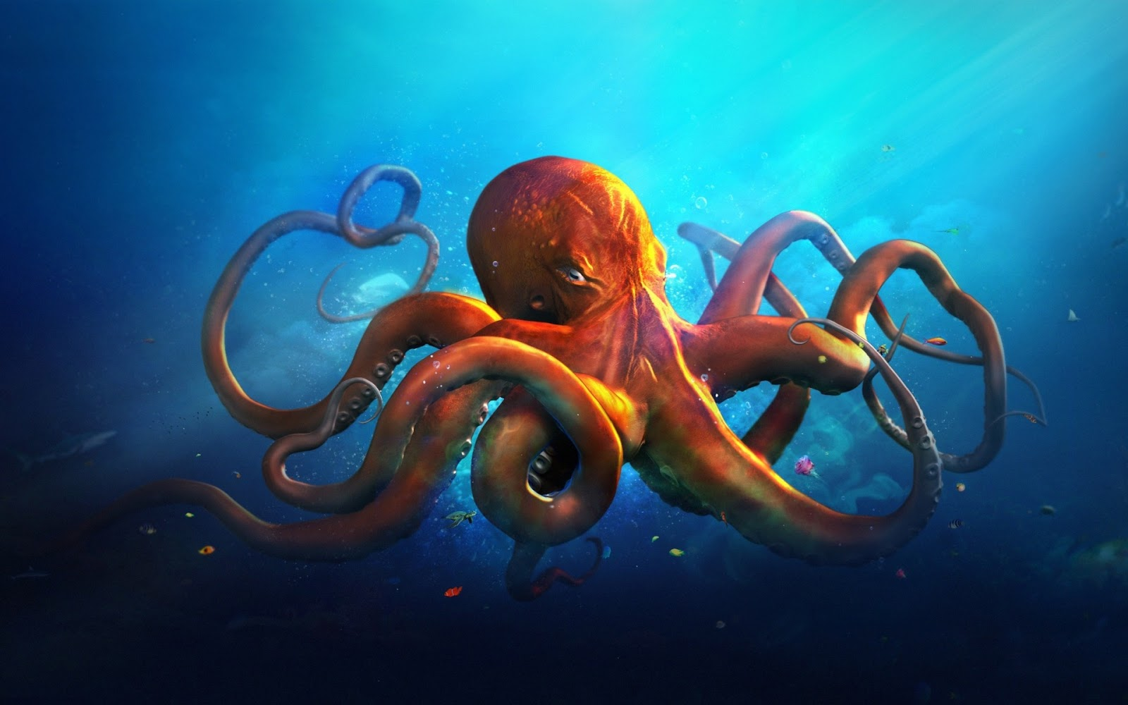 345573-octopus-wallpaper-hd-1.jpg