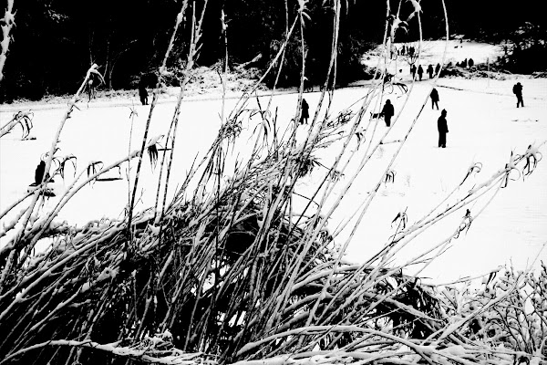 Solitary Shadows di daniel_prince