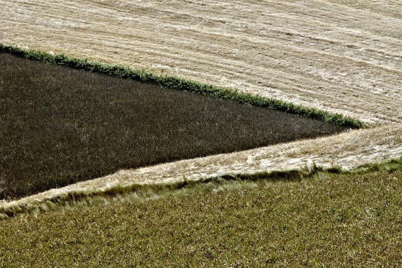 contrasti agricoli di ruggeri alessandro