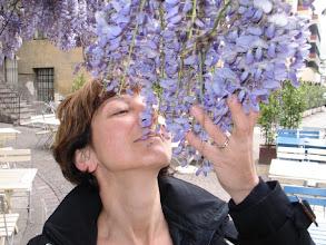 Photo: Ich liebe diesen Duft! Meine eigenen Glyzinien auf dem Münchner Balkon werden heuer eine fremde Nase erfreuen.