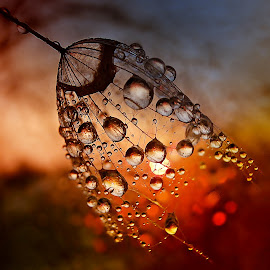 The Tears For The Sun by Marija Jilek - Nature Up Close Natural Waterdrops