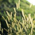 live wallpaper grass icon