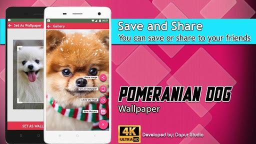 Download Pomeranian Dog Wallpaper Hd Google Play Softwares