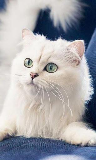 白猫ジグソーパズル