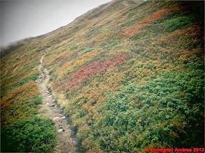 Photo: IMG_4083 i colori dell autunno sull appennino reggiano sullo 00 POSTER