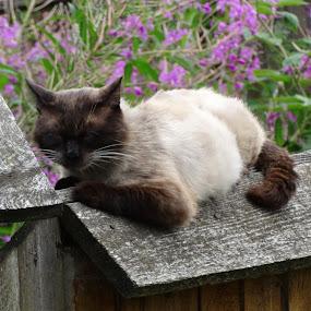 by Catalin Petcu - Animals - Cats Kittens