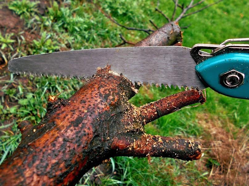 Wycięcie drzewa