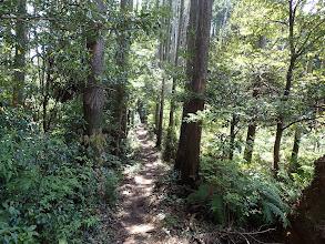 植林の道に