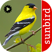 Bird Song Id USA Automatic Recognition songs calls v9 Icon