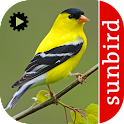 Bird Song Id: USA Automatic icon