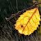 S Leaf in Rain F Feb 12.jpg