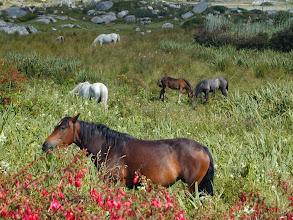 Photo: Connemara Pferde