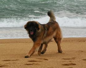 Photo: Découverte de la plage