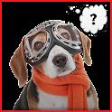 Perro traductor icon