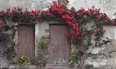 Photo: Pas de porte fleuri
