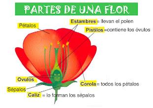 Photo: PARTES DE UNA FLOR