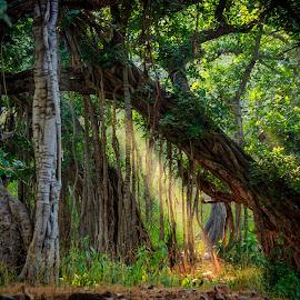 Jungle by Sunayan Banerjee - Nature Up Close Trees & Bushes ( jungle, foliage, sunrays, sunlight, light,  )