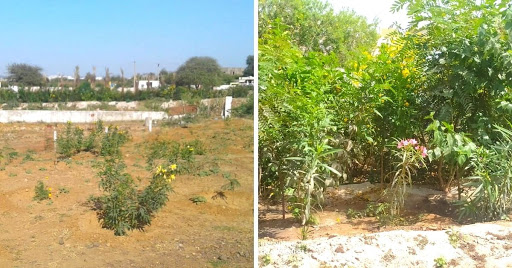 Sarpanch Leads Kutch Village to Plant 7000 Trees & Build Lush Forest Using Wastewater