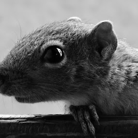 HELLO ........ ANY 1 IS THERE  ? SQUALOR13/03/15 @ CHIPLUN 3.27 P.M by Vaibhav Chavan - Black & White Macro
