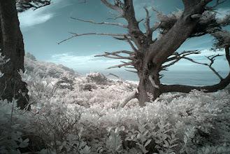 Photo: Cape Perpetua