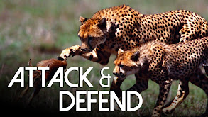 Attack and Defend thumbnail